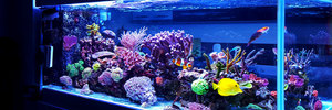L'acquario e le tipologie di pesci