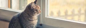 Gatto dentro o fuori casa?