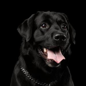 Offerte per Cani