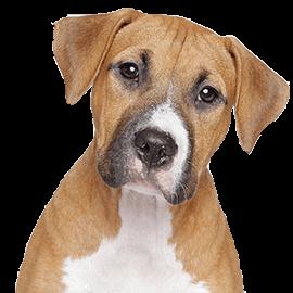 Prodotti per cane