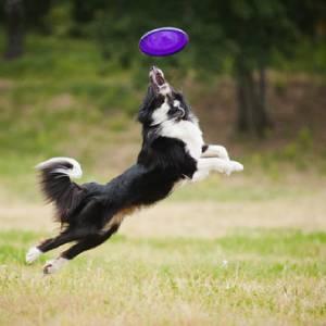 Cani e Sport: un binomio perfetto
