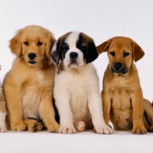 L'adozione del cucciolo e le fasi comportamentali