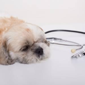 Crisi epilettiche cane