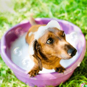 Igiene del Cane: le 4 regole fondamentali