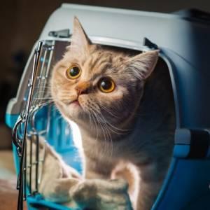 In vacanza con i gatti: cose da sapere