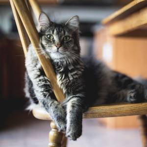 Giornata mondiale del Gatto il 17 febbraio