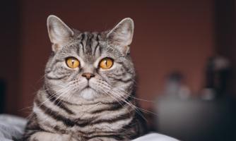 Prodotti per gatto
